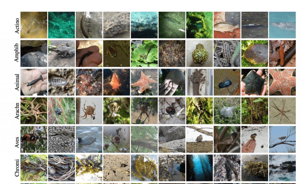 動植物の画像データセット – The iNaturalist Challenge 2017 Dataset